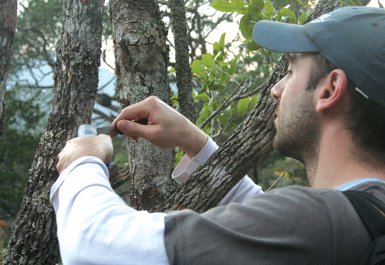 Microbiologist Diego Libkind collects samples from trees in Bariloche.