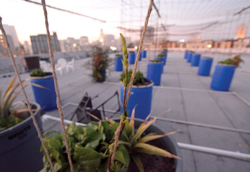 """The rooftop at Angel City Brewing and gardener Ramutis """"Ray"""" Narkevicius (right). 
