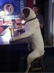 Beastdog75