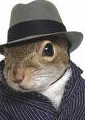 squirrelmadness