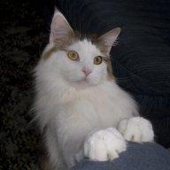 cooncat