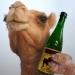 Boozecamel