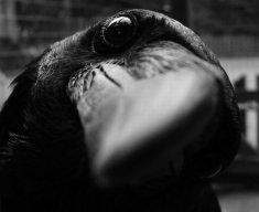crowsoup