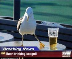 seagullbeer