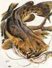 evilcatfish