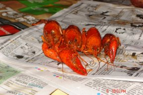 Crawfish61