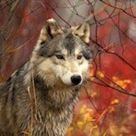 AutumnWolf13
