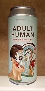 Adult Human