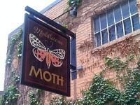 Meddlesome Moth
